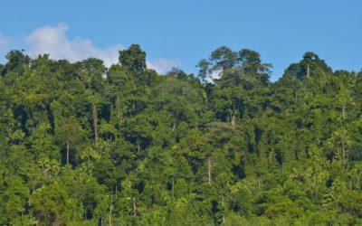 The Last Jungles
